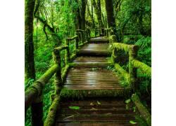 雨天木板道美景高清摄影
