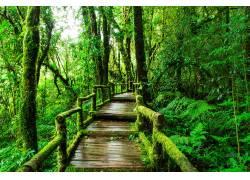 雨天木板道高清美景