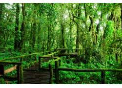 树林高清木板道摄影