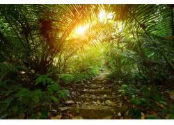 树林小路美景高清摄影