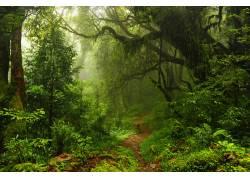 清晨森林小路美景摄影