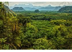 热带雨林美景高清摄影