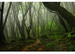 森林浓雾高清摄影