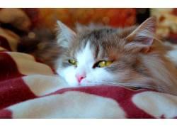 可爱的小花猫高清摄影