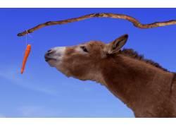 可爱的小毛驴高清摄影