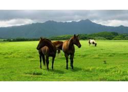 草原上的马高清摄影