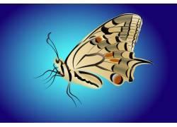 一只美丽的蝴蝶
