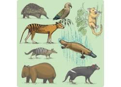 几种野生动物素材集图片