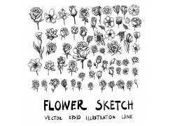 手绘黑白色花卉
