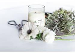白色野花香草