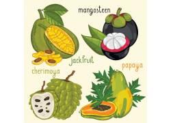 热带水果插画