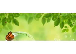 绿色清新树叶蝴蝶 横幅 banner图片