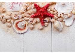 海洋贝壳拍摄