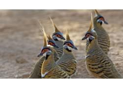 野生动物鸟摄影图片