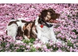 花海宠物狗图片