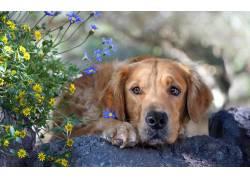 花朵宠物狗图片