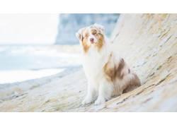 海滩宠物狗图片