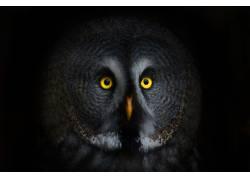 深夜里的猫头鹰