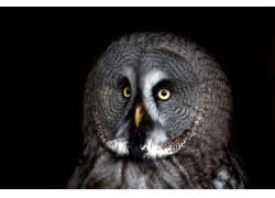 夜幕下的猫头鹰