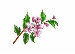 花枝上的鲜花素材