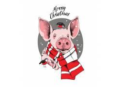 粉色戴围巾的猪