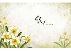 韩式水仙花清新背景