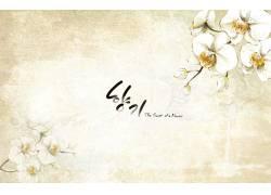 古典白色小花