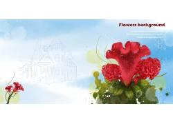 红色鸡冠花背景