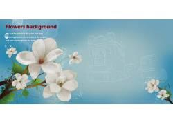 白色花朵背景