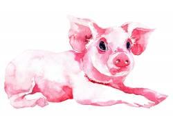 红色的小猪装饰画
