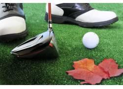 草坪上的落叶和高尔夫