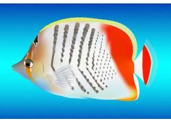 彩色热带鱼
