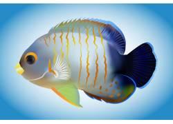 海洋热带鱼