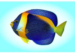 蓝色手绘热带鱼