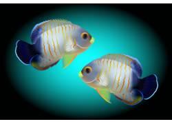卡通彩色热带鱼