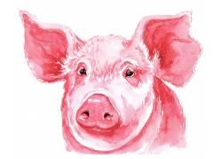 红色小猪的头部特写