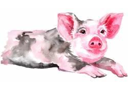 小猪的水彩装饰画