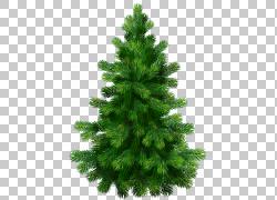 杉树,透明杉树,绿色圣诞树例证PNG clipart草,圣诞节装饰,云杉,生图片